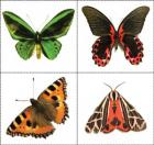 Butterfly and moth concentration cards
