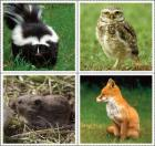 Skunk, owl, mouse, and fox
