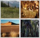 Alpine meadow, cave, desert, and rainforst images