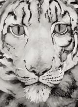 The Snow Leopard cover