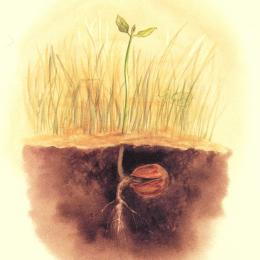 A painting of a small seedling sprouting from a buried nut